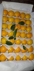 Лимон на Экспорт